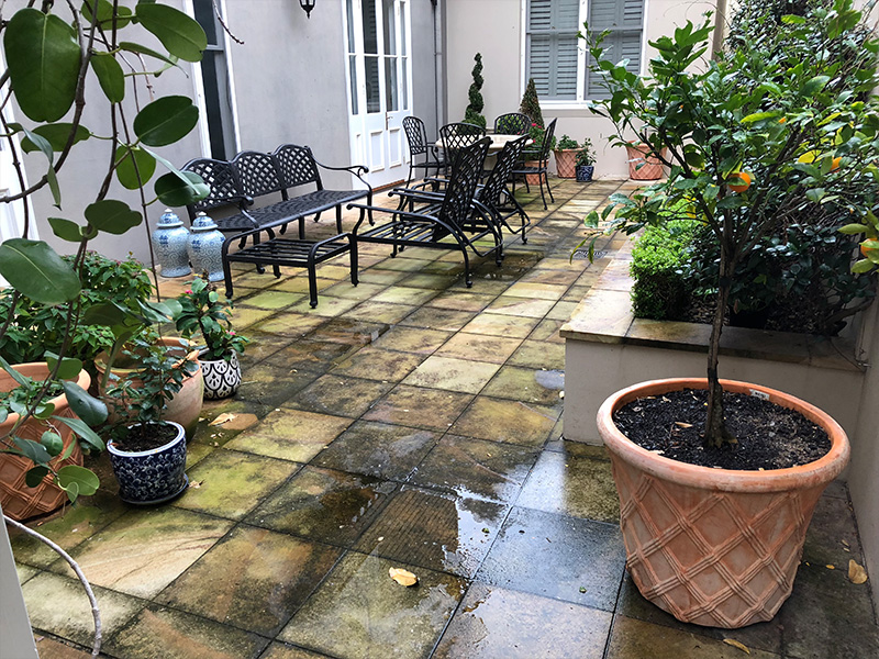 Sandstone pavers organic stain cleaning BEFORE